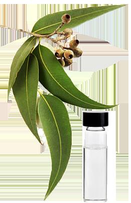 eucalyptus_oil_new
