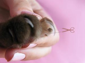 Кошкины царапки могут быть причиной болезни