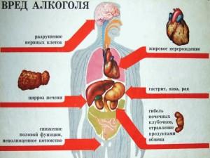 Вредное воздействие алкоголя на внутренние органы