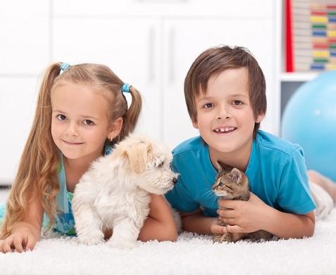 Кошки и собаки - источники паразитов