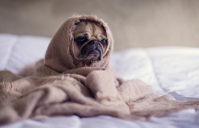 Правильные условия для сна